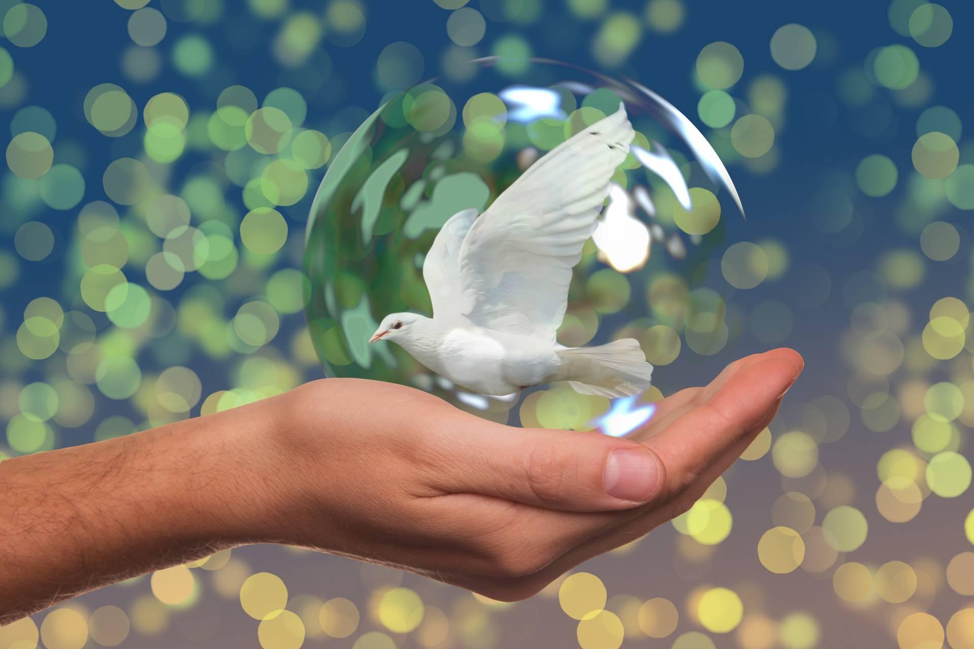 peace-dove-2489589