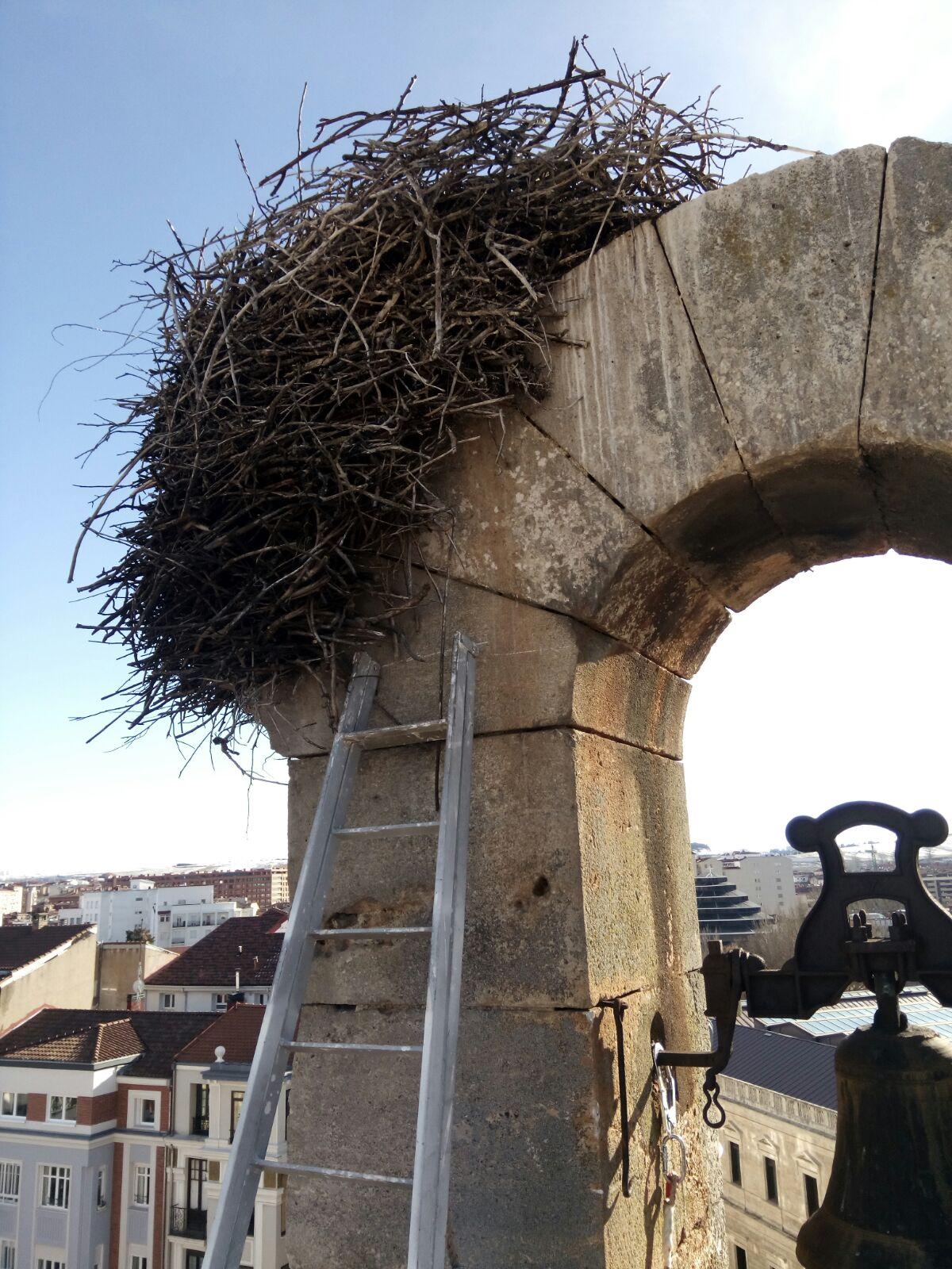 nido ciguena